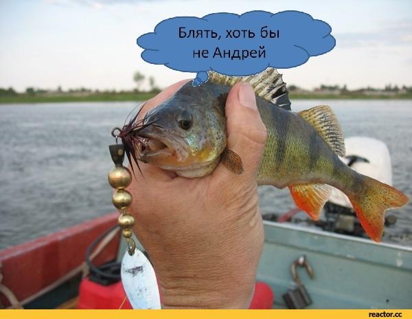 ловля рыбы с причала