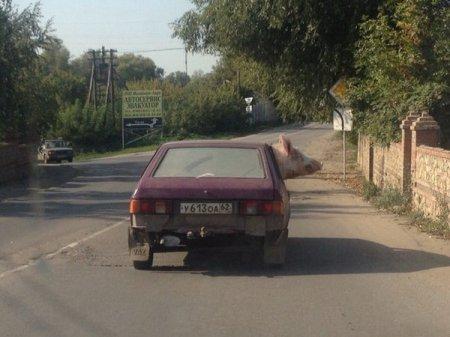 http://www.porjati.ru/uploads/posts/2015-10/thumbs/1444152910_1.jpg