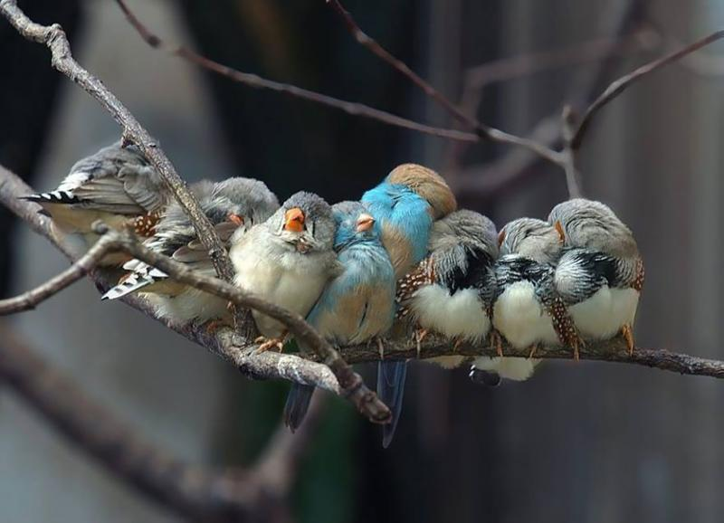 http://otpadus.com/wp-content/uploads/2015/08/birds-keep-warm-bird-huddles-2__880.jpg