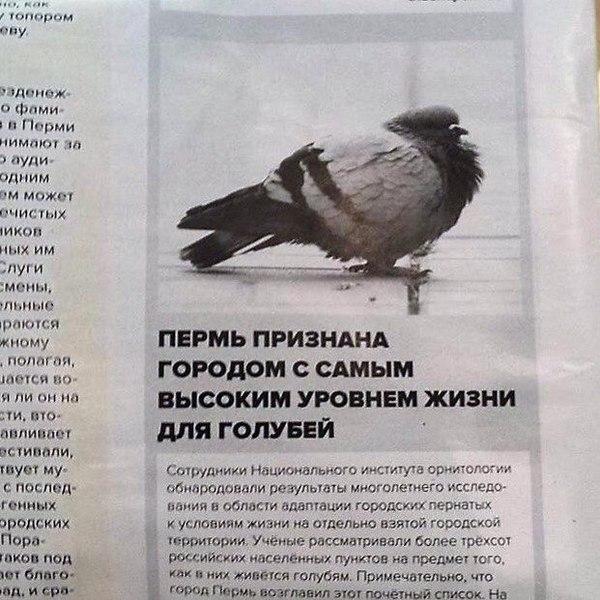 http://cs8.pikabu.ru/post_img/2016/01/19/4/1453183046146538012.jpg