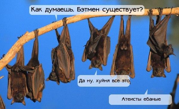 http://pp.vk.me/c631817/v631817519/27251/Zh_lwJf5IFA.jpg