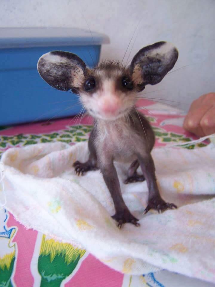 http://animalsweb.xcuz.me/wp-content/uploads/2016/02/117f3__funny-animals-198-10.jpg