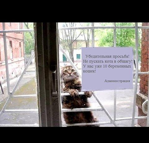 http://www.e1.ru/fun/photo/view_pic.php/p/b033c8cac750a300d652441f39e2a5fc/view.pic.jpg