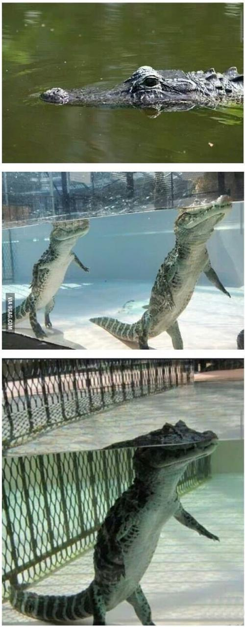 http://img-9gag-fun.9cache.com/photo/agNoMRx_700b.jpg