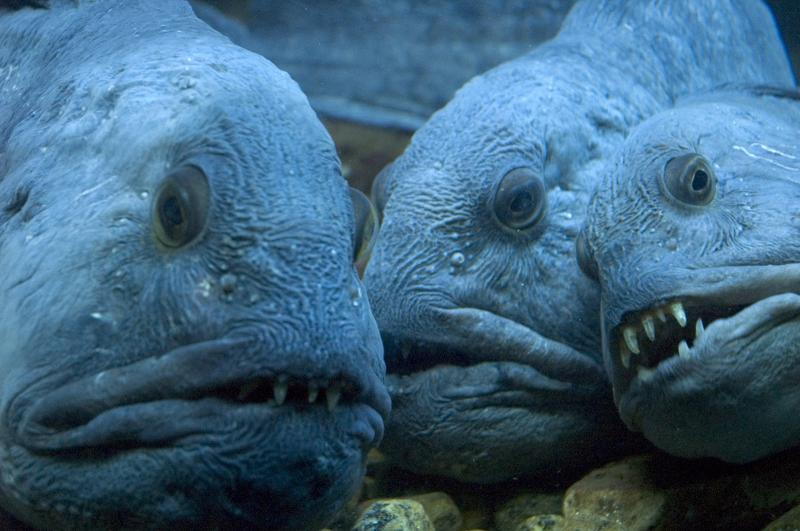 http://img-cdn.brainberries.co/wp-content/uploads/2015/11/15-of-The-Most-Terrifying-Animals-You-Never-Knew-About-8.jpg