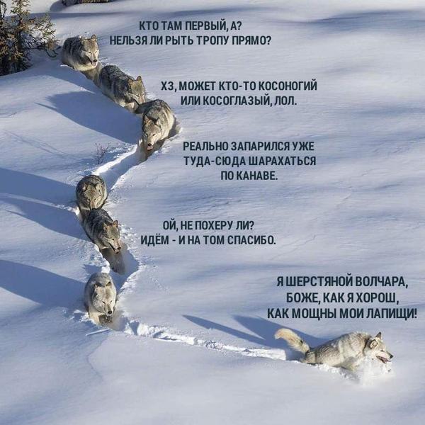 http://cs9.pikabu.ru/post_img/2017/01/31/11/148589017712856793.jpg