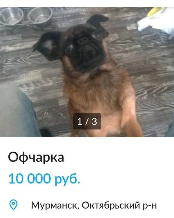http://urod.ru/insert/20170512/UrodRu20170512lgovs_19.jpg