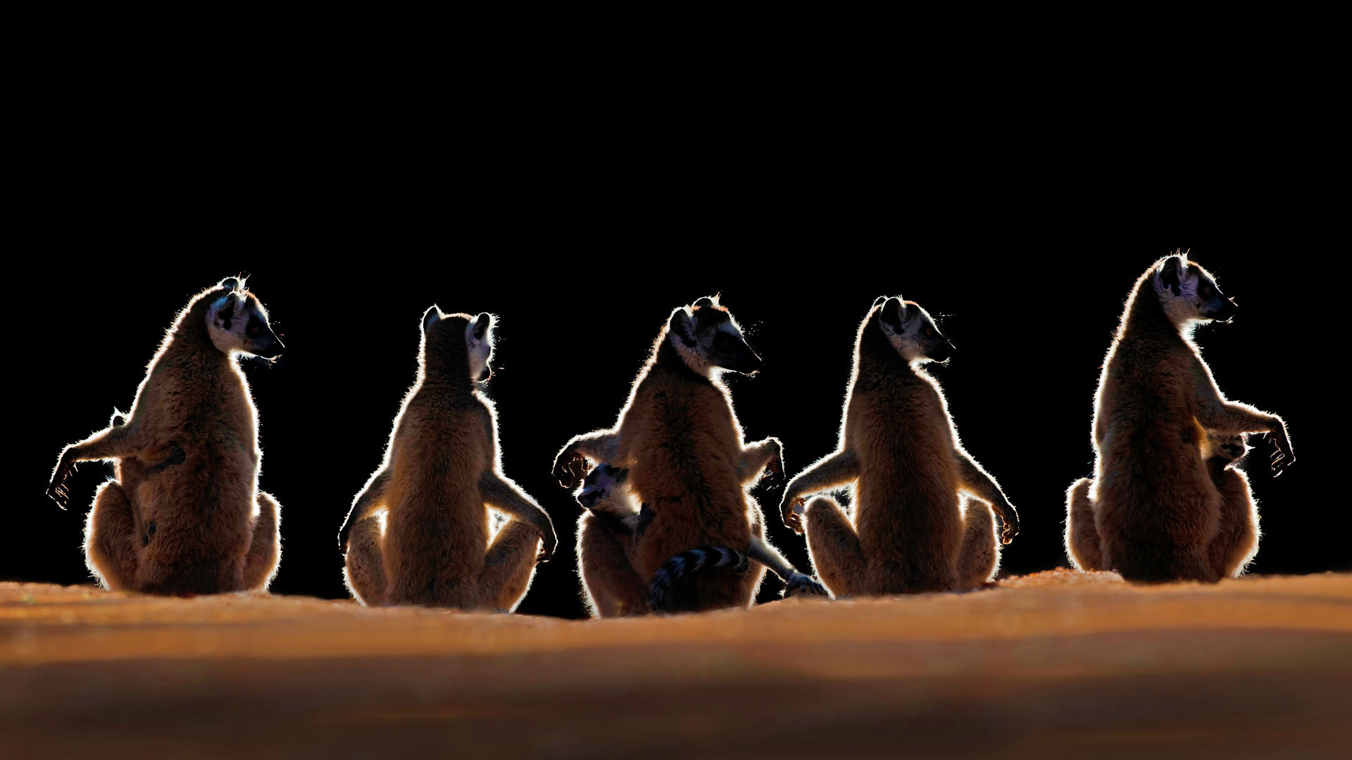 https://www.bing.com/az/hprichbg/rb/MadagascarLemurs_ROW7986241575_1920x1080.jpg