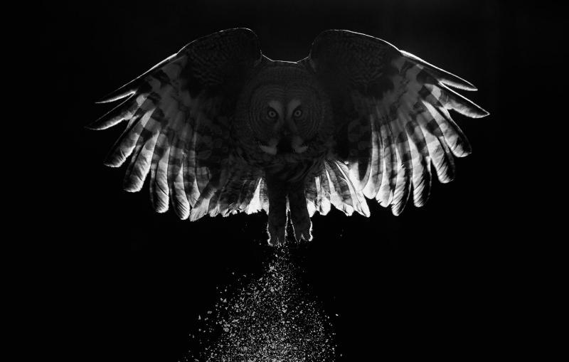 http://www.thisiscolossal.com/wp-content/uploads/2017/08/bird-8.jpeg