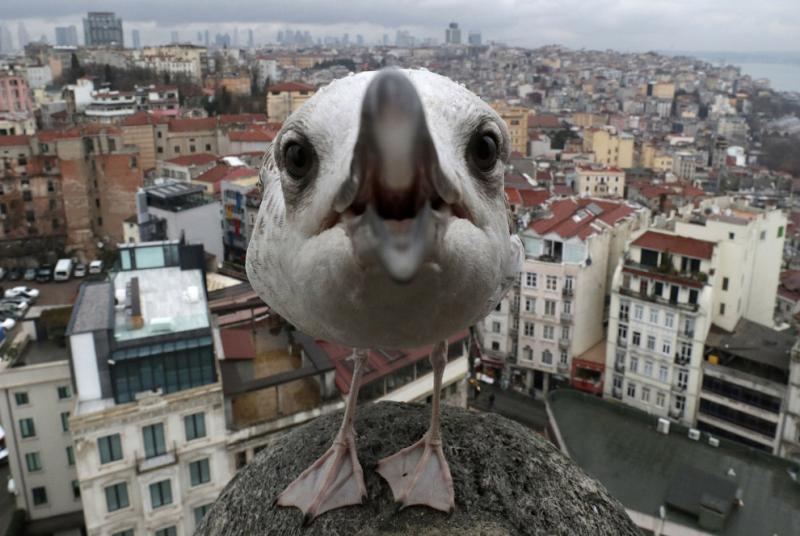 http://loveopium.ru/content/2017/05/animals/15s.jpg