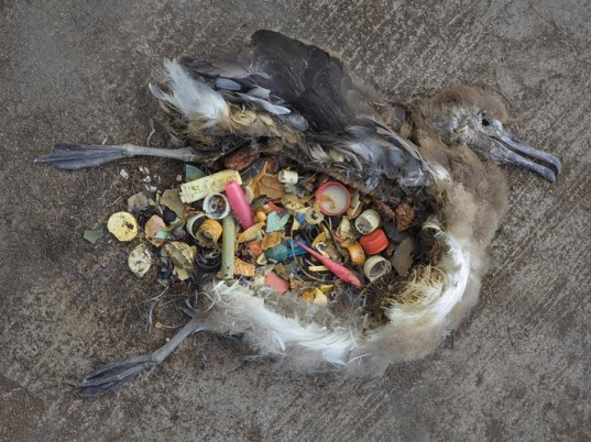 http://www.lazerhorse.org/wp-content/uploads/2013/11/Great-Pacific-Garbage-Patch-Pacific-Trash-Vortex-Dead-Bird-4.jpg