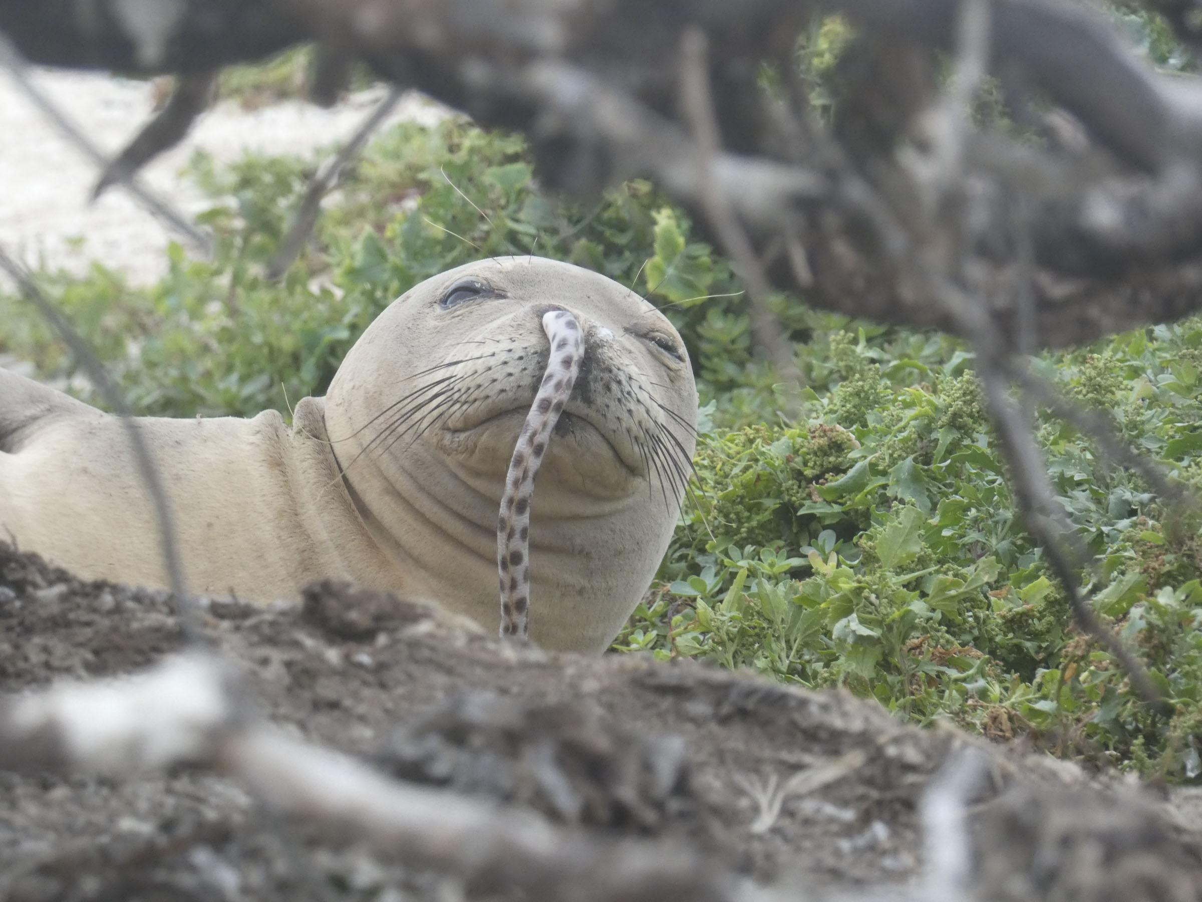 http://mystylenews.com/wp-content/uploads/2018/12/ccelebritiesfoto4896x3672-hawaiianmonkseal-eel-brittanydolan.jpg