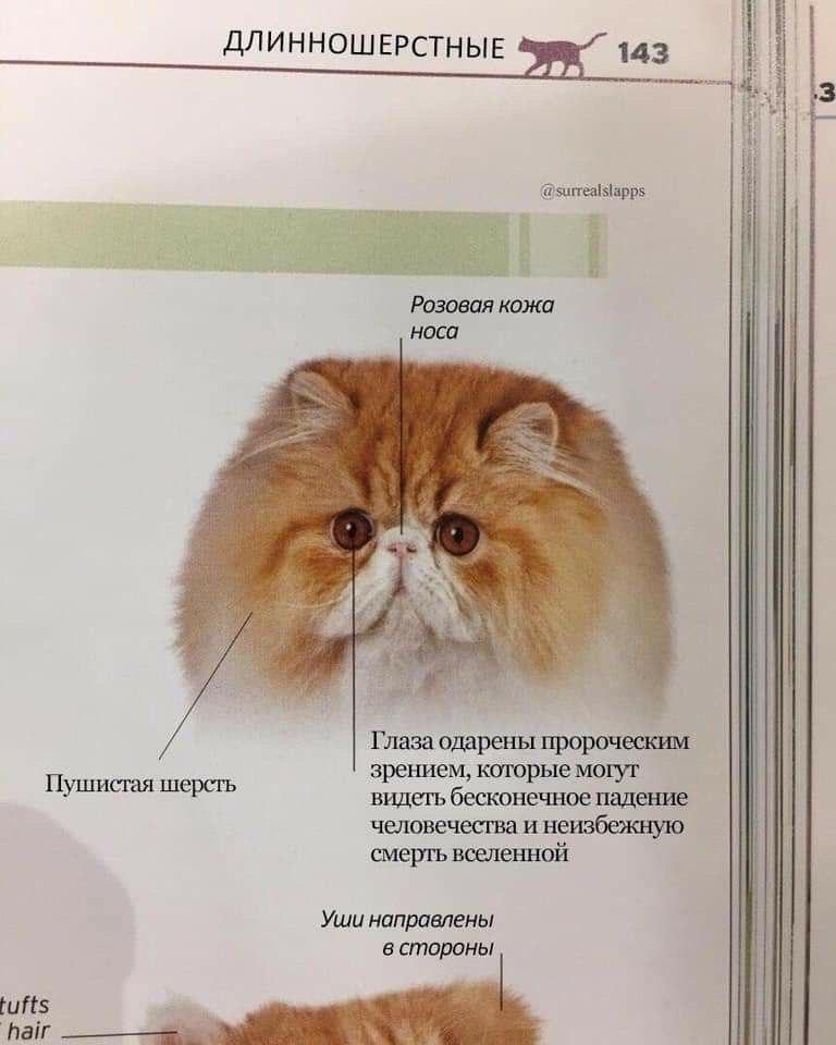 http://www.picshare.ru/uploads/190719/Huy245SokV.jpg