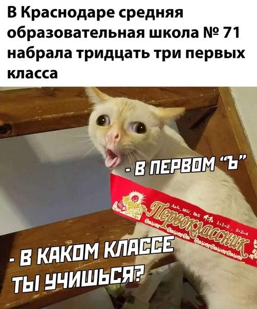 https://cs11.pikabu.ru/post_img/2020/08/26/4/1598416954167731071.jpg