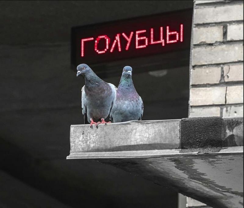 http://images.vfl.ru/ii/1631201471/4af5e1ec/35798529.jpg